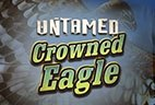 играть в автомат Untamed Crowned Eagle бесплатно